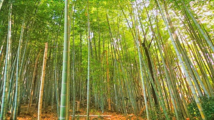 竹林整備 5