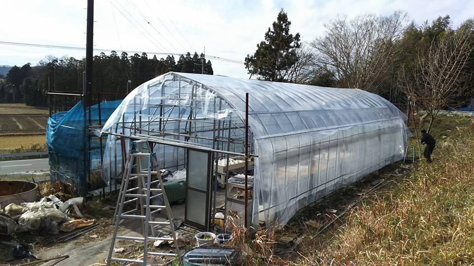 1月 水耕栽培用ハウス 電力はソーラー発電