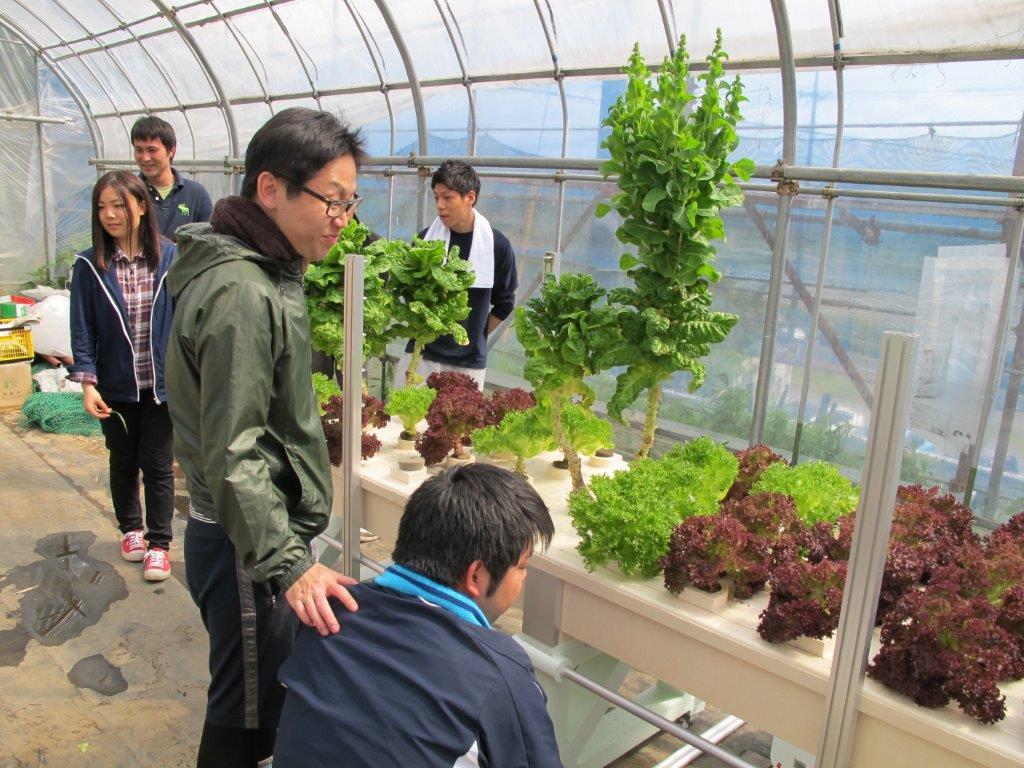 4月水耕栽培リーフレタス