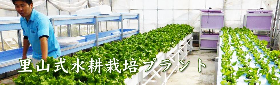 里山式水耕栽培プラント2